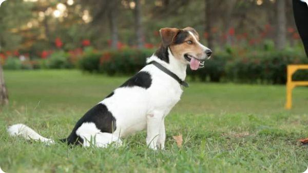 dog training courses online